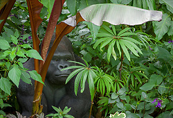 Tropical foliage border at John Massey's garden with gorilla sculpture. Includes Ensete maurelli (Ethiopian black banana) and Begonia luxurians (Palm leaf begonia)