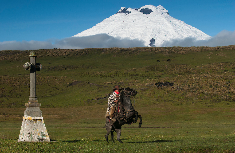 Ecuadorian Chagra (cowboy) at cross of Hacienda (ranch) rearing up on horse. <br /> Yanahurco Hacienda (Ranch) - largest privately owned ranch in Ecuadorian Andes (25.000 hectares)<br /> Cotopaxi Volcano in back<br /> Andes<br /> ECUADOR.  South America