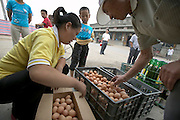 Outside the Luckybird meat market in a nearby town, Li Jinxian (in yellow shirt) selects eggs to buy. (Supporting image from the project Hungry Planet: What the World Eats.) The Cui family of Weitaiwu village, Beijing Province, China, is one of the thirty families featured, with a weeks' worth of food, in the book Hungry Planet: What the World Eats.