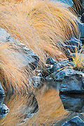 Fall Grasses, Hummock Grass, Rocks And Reflections II (Vertical), Side Channel Of Indian Creek Near Watsons, Tributary Of The Feather River, Northern Sierra Nevada, California, copyright 2013 David Leland Hyde.