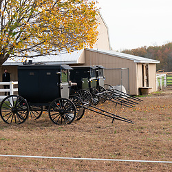 A row of Amish buggies are parked at a barn.