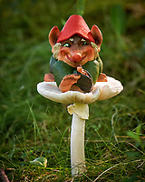 Troll on a Mushroom. Image taken with a Fuji X-T1 camera and 100-400 mm OIS lens