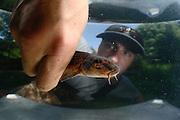 Jan Hallermann Fischereibiologe am IGB hält einen Gründling  (Gobio gobio) in der Hand. Das Tier wurde von den Fischereibiologen in der Löcknitz bei Klein Wall gefangen.