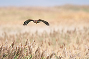 Wildlife photography from Perry South UT USA