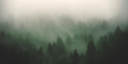 Mist covers the wooded slopes of the Bavarian Alps in southern Germany