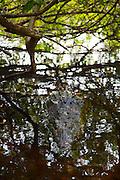 Cocodrilario La Manzanila, Crododile Reserve, Costalegre, Jalisco, Mexico