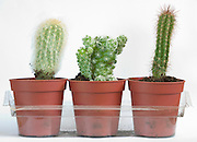 various cactus plants against a white backdrop