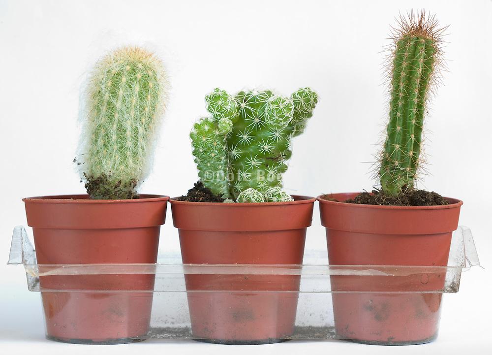 various cactus plants against a white backdrop