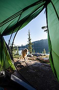 View of dog (golden retriever) from a tent at Bull Run Lake, Carson-Iceberg Wilderness, Stanislaus National Forest, California
