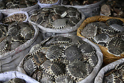 Sacks of turtle shells displayed at a traditional Chinese medicine market in Bozhou, Anhui Province, China on 02 August, 2011. The birth place of legendary doctor Hua Tuo, Bozhou is now one of the four major trading centers in China for traditional Chinese medicine.