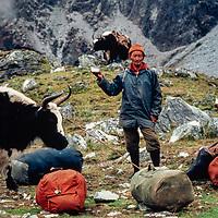 Sherpa Yak Drivers enjoy a break with sale and butter tea.  Khumbu Region, Nepal