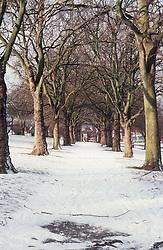 Trees in park in winter,