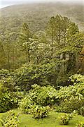Costa Rica, Cloud Forest below Arenal Volcano
