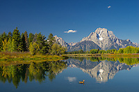 The waters were almost perfectly calm at Oxbow Bend on this fall morning. Then this lone duck came along, disturbing the reflection. The peak in the background is the 12,605 foot high Mount Moran