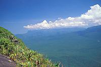 Vista de la selva amazónica desde el tepuy Autana, Amazonas, Venezuela.