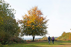 ©Licensed to London News Pictures 19/10/2020  <br /> Sevenoaks, UK. A couple holding hands as they go for an afternoon walk. Autumnal weather at Toys Hills woodland, Sevenoaks, Kent. Photo credit:Grant Falvey/LNP
