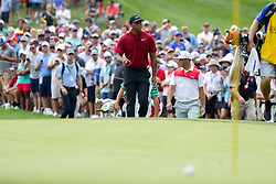 August 12, 2018 - St. Louis, MO, U.S. - ST. LOUIS, MO - AUGUST 12:  Tiger Woods (USA) walks to the third green as his ball lays in the foreground during the PGA Championship August 12, 2018, at Bellerive Country Club in St. Louis, MO.  (Photo by Tim Spyers/Icon Sportswire) (Credit Image: © Tim Spyers/Icon SMI via ZUMA Press)