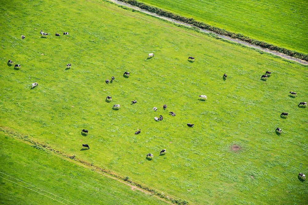 Nederland, Groningen,omgeving Nieuwe Pekela, 27-08-2013;<br /> Melkvee in een weiland.<br /> Dairy cattle in a field.<br /> luchtfoto (toeslag op standaard tarieven);<br /> aerial photo (additional fee required);<br /> copyright foto/photo Siebe Swart.
