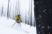Diamond Peaks Ski Patrol member Mac Fuller skis through the Cameron Peak Fire burn scar near Montgomery Pass, Feb. 6, 2021.