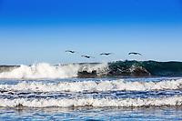 Pelicans flying over playa santa del mar beach Aposentillo El Viejo  in Nicaragua