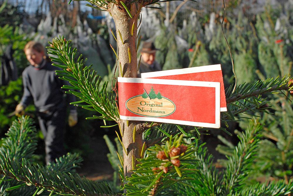 Weihnachtsbaumverkauf - Nordmann Tanne     englisch    