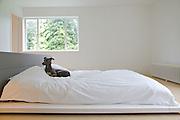 Freud, the dog, in the master bedroom at Warren House, Wayne McGregor's Dartington Estate home in Devon<br /> Vanessa Berberian for The Wall Street Journal