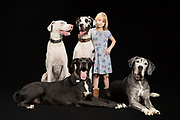 Family portrait of four great danes with a little girl