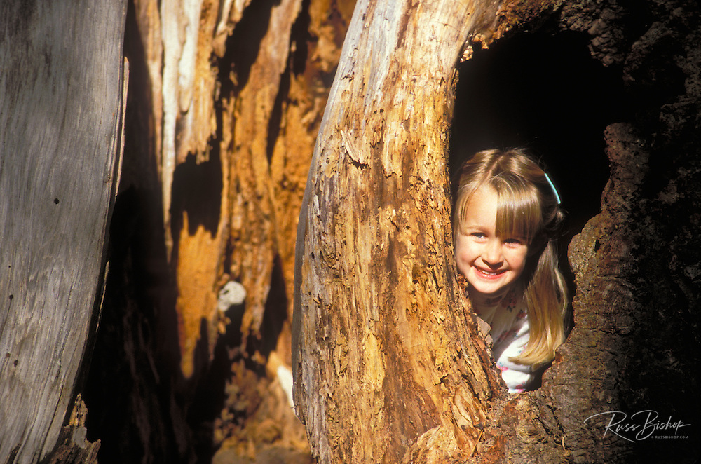 Child (age 3) peering out of a hole in the hollow trunk of a Giant Sequoia, Sequoia National Park, California