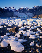 McBride Glacier with numerous calved icebergs exposed at low tide, Muir Inlet, Glacier Bay National Park, Alaska.
