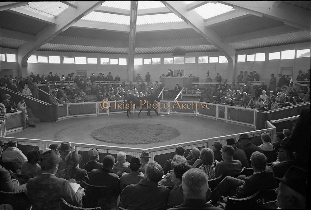 16/09/1968<br /> 09/16/1968<br /> 16 September 1968<br /> Goffs September Bloodstock Sales at the RDS, Ballsbridge, Dublin. General view of the sales ring at the sales.