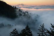Sunrise Fog on Mt. Tamalpais, Marin County, California