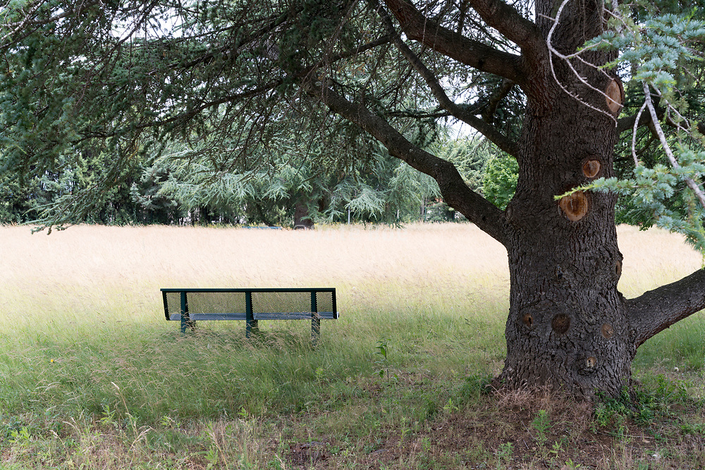 bench looking out over field with tall grass