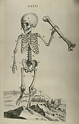 Human Anatomy illustration by William Cheselden in Osteographia, or The anatomy of the bones. (London: 1733).