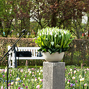 NLD/Lisse/20190417 - Minister Rutte doopt tulp inde Keukenhof, De Don White tulp