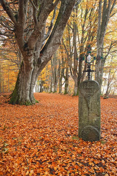 Cros de la Femme, Bois de Paul, Les Deux-Frères, PNR Livradois-Forez, Auvergne, France
