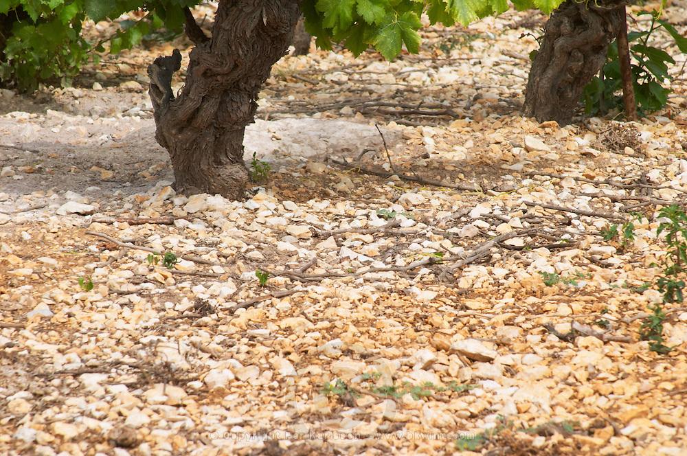 Domaine l'Aigueliere. Montpeyroux. Languedoc. Syrah grape vine variety. Soil argilo-calcaire, clay and calcareous limestone. Terroir soil. France. Europe. Vineyard. Soil with stones rocks. Clay. Calcareous limestone.