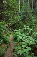 Chilliwack River Trail North Cascades