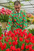 Working on the Bloms Bulbs tulip Stand in special suits designed by Wacky Suits -The opening day of the Chelsea Flower Show.
