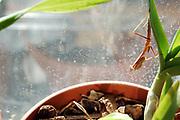 500px Photo ID: 4410011 - mantis