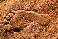 Footprint of Nasser Al Amrah in the desert, Dahna Sands. Bedouin can recognize each other by footprints like this one.