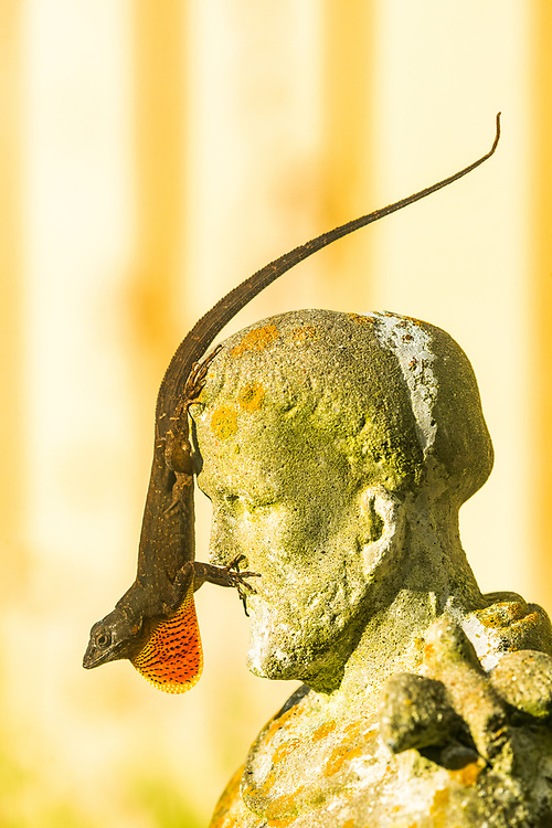 St. Francis and the brown anole lizard, Houston, Texas