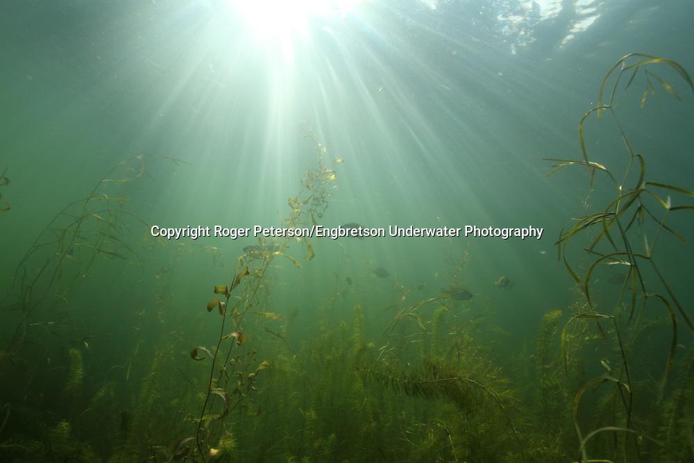 Underwater Scene<br /> <br /> Roger Peterson/Engbretson Underwater Photography