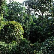 Malaysia, Rain forest of Danum Valley. Sabah, Malaysia.