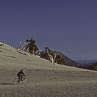 MOUNTAIN BIKING. Kief Hillsbery in Ancient Bristlecone Forest, Inyo N.F., White Mts., CA.