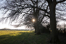 2021-02-28 Anti-HS2 activists protect row of oaks in Great Missenden