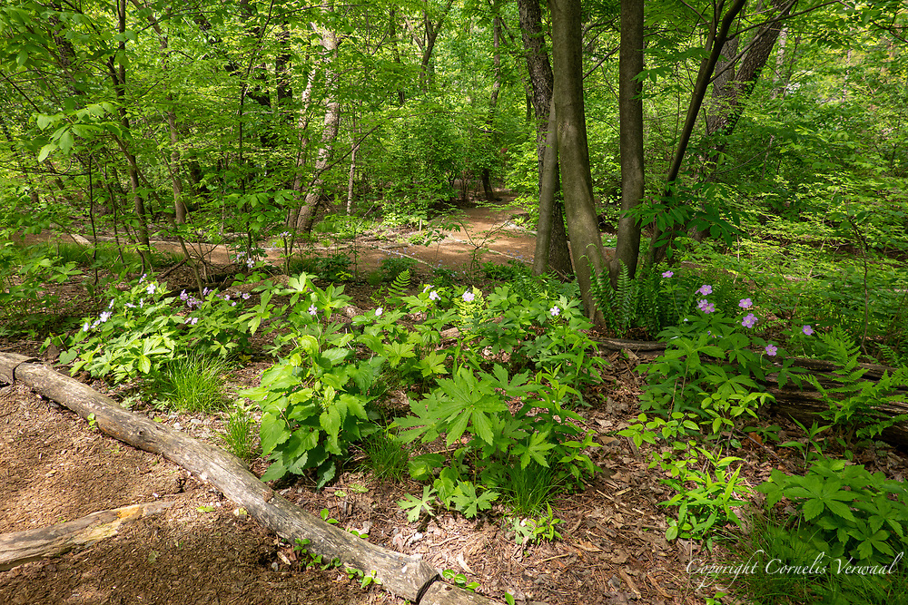 A walk through Hallett Nature Sanctuary in Central Park.