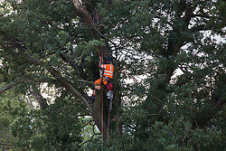 Offchurch, UK. 24th August, 2020. An HS2 worker prepares to fell a mature oak tree alongside the Fosse Way as part of works in connection with the HS2 high-speed rail link. The controversial HS2 infrastructure project is currently expected to cost £106bn and will destroy or significantly impact many irreplaceable natural habitats, including 108 ancient woodlands.