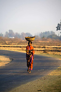 A Dongria Kondh tribal woman carries water on her head on a road through Kalyansinghpur village, Orissa, India. The Dongria Kondh are a protected 'Scheduled' Caste of Original (aboriginal) people that practice animism and live a settled rural life. Their deity is a mountain from which a mining company, Vedanta is seeking to extract bauxite which will largely destroy the mountain and the Kondh's traditional way of life.