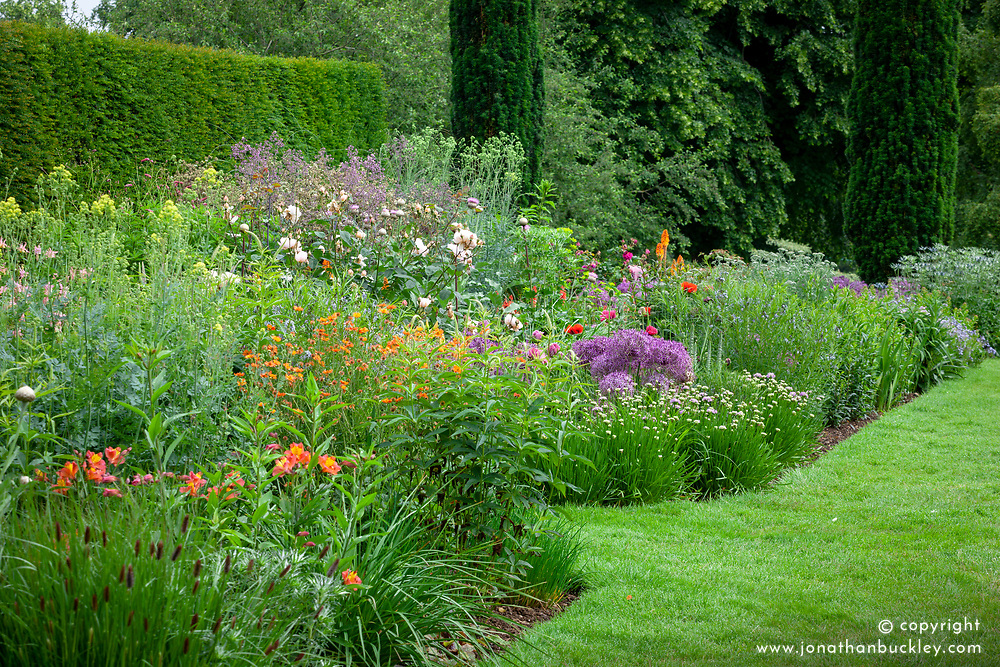Border at Pettifers with Rosa 'Gentle Hermione' syn. Ausrumba and Allium cristophii AGM  - Star of Persia.