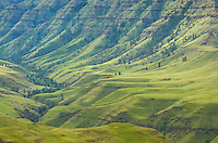 Green hills above Imnaha Canyon, Hells Canyon Recreation Area Oregon